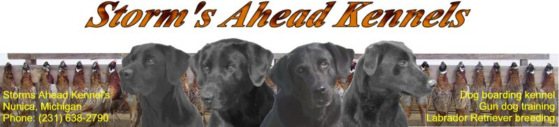 Storm's Ahead Kennels home page.